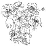 Field poppies. Spring Pattern. For adult coloring book in zenart style. Hand-drawn, retro, doodle, vector, uncoloured. The best for your design, textiles Royalty Free Stock Photography