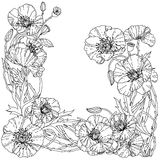 Field poppies. Spring Pattern. Field poppies  for adult coloring book in zenart style. Hand-drawn, retro, doodle, vector, uncoloured. The best for your design Royalty Free Stock Images