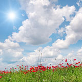 Field with poppies Royalty Free Stock Photos