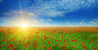 Field with poppies and sun. On blue sky stock image