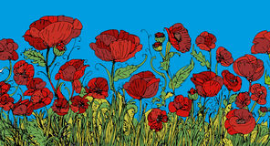 Field of poppy flowers flowers ... scent of love and passion.. With light blue background Stock Photos