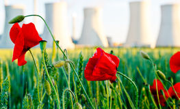 Field  poppy with power station Royalty Free Stock Photography