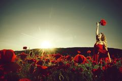 Field of poppy seed with happy woman. With long curly hair in red dress hold flower bouquet with green stem on blue sky background, summer, drug and love royalty free stock photography