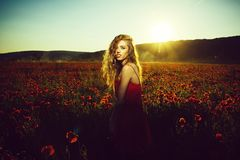 Field of poppy seed with woman stock photos
