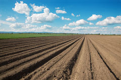 Field of potatoes and the sky Stock Photo