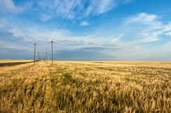 Field and powerlines Stock Photos