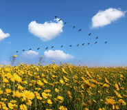 The field of pretty yellow buttercups Royalty Free Stock Photography