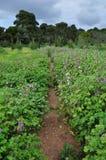 Field of purple flowers Stock Photo