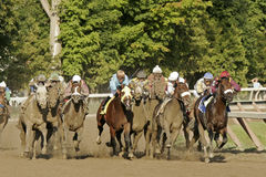 Field of Racing Horses. The field for the million-dollar Travers Stakes at the top of the stretch at Saratoga Race Course, Saratoga Springs, NY, on August 23 royalty free stock photography