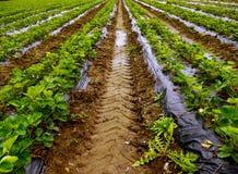 Field rain acre Stock Photography