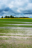 Field after rain. Royalty Free Stock Image