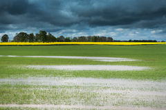 Field after rain ... Stock Photo