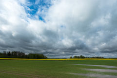 Field after rain ... Stock Image