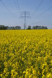 Field with rape and electricity mast. High voltage mast under sky on rape plant field Royalty Free Stock Photos