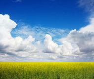 The field of rape flowers and the blue sky Stock Photo