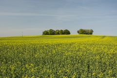 Field of on the hill and copse. Horizon and blue sky stock photos