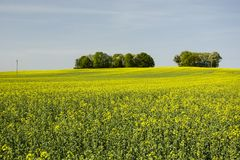 Field of and tree on the hill. Horizon and blue sky royalty free stock image