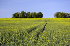 Field of and trees on the hill. Horizon and blue sky royalty free stock images