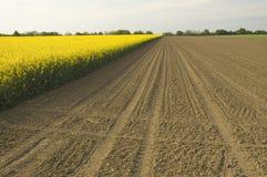 field rapeseed Στοκ φωτογραφία με δικαίωμα ελεύθερης χρήσης