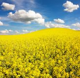 Field of rapeseed with beautiful cloud Stock Photos