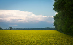 Field of rapeseed with beautiful cloud stock images