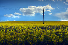 Field of Rapeseed. Landscape photo of a rapeseed (Brassica Nappus) field with electrical poles, clouds and blue sky Stock Images