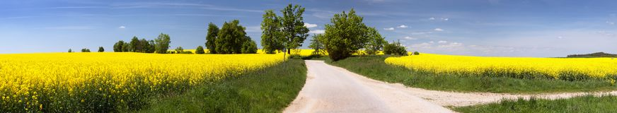 Field of rapeseed with rural road Royalty Free Stock Images