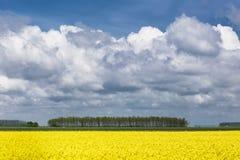 field rapeseeden arkivbild