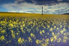 field rapeseeden royaltyfri foto