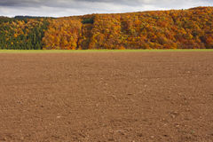 Field ready for sowing winter grain Stock Photos