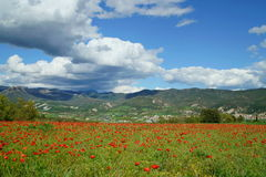 A field of red poppies in Oliana (Catalonia). A view of the village of Oliana, a little city of Alt Urgell, in Lleida (Catalonia) with a field of red poppies in Stock Photos
