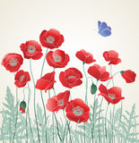Field of Red Poppies, Poppy with Blue Butterfly. Card for lifes events, poppy greetings card with copy space Royalty Free Stock Photos