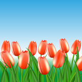 Field of red tulips. On the infinite horizon Royalty Free Stock Photo