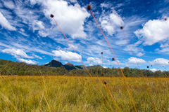A field of reeds in front of mountains and trees Stock Photo