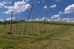 Field in the region of hallertau, Bayern (germany) Royalty Free Stock Images
