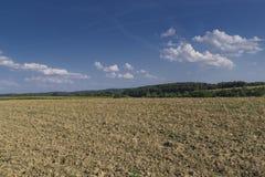 Field in the region of hallertau, Bayern (germany) Stock Image