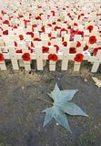 Field of Remembrance. Westminster Abbey, London Stock Photos