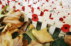 Field of Remembrance Stock Photos