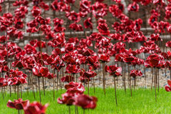 A field of remembrance poppies Royalty Free Stock Photography