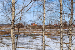 Field with the remnants of snow through the branches of birch. Spring landscape, field with the remnants of snow through the branches of birch Royalty Free Stock Image