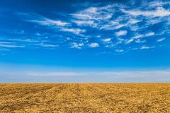 Field with removed harvested crop under the blue sky at sunny autumn day