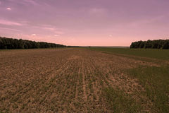 Field rests in summer. Fallow land. In the evening Royalty Free Stock Images