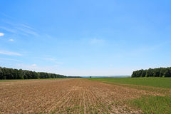 Field rests in summer. Fallow land. Field rests in summer, Ukraine. Fallow land Stock Photos