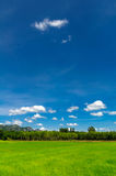 Field rice and blue sky Royalty Free Stock Photos