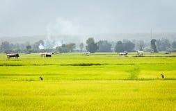 Field rice landscape Royalty Free Stock Photos