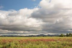 field rice Naturlig väg att växa ris Arkivfoto