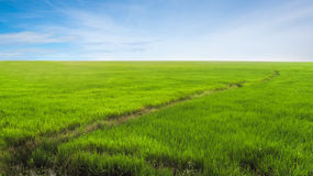 Field of Rice Stock Photo