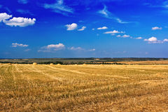 Field of ripe wheat. Just after harvesting royalty free stock images