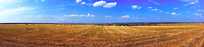 Field of ripe wheat. Just after harvesting royalty free stock photography