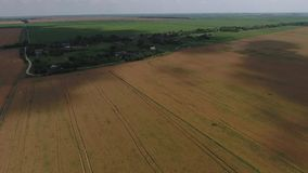 Field of ripe wheat. View from above. Royalty Free Stock Photos
